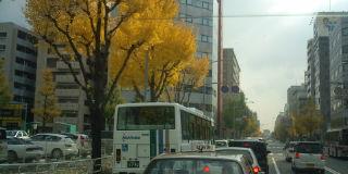 イチョウとバス